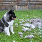 Собачья шерсть: какичтоонаможет вылечить