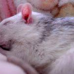 «Гормон сна» защищает отсердечной недостаточности