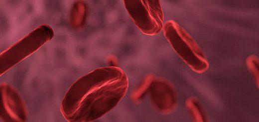 Молодая кровь может продлить жизнь пожилым людям –ученые